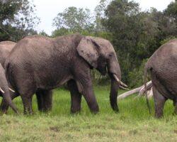 Ecobushman International Expeditions, Tanzania, Kenya, Zambia, Uganda, Rwanda