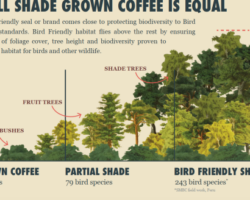True Love for Truly Bird Friendly Coffee